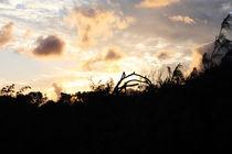 sunset by daindilove