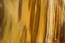 Wood by daindilove