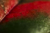 leaf von Daniel Schröcker
