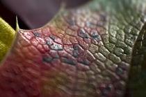 leaf by Daniel Schröcker
