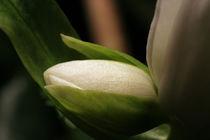 blossom by Daniel Schröcker