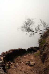 the path by Daniel Schröcker