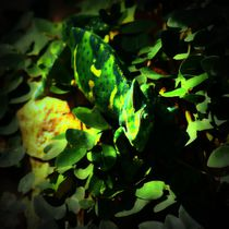 Jemenchamäleon in der Nacht von kattobello