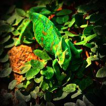Leuchtend grünes Jemenchamäleon von kattobello