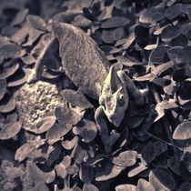 Jemenchamäleon in schwarz und weiß von kattobello