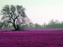 Violett by Hans-Georg Kasper