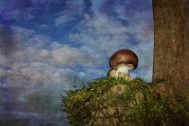 Der Pilz von Claudia Evans