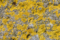 Lichen on Concrete von maxal-tamor