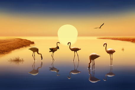 Flamingos-75-50