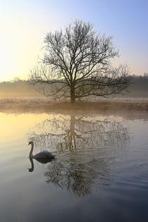 Der Schwan und der Baum by Bernhard Kaiser