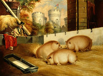 Three Pigs with Castle in the Background by English School