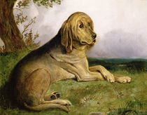 A Bloodhound in a Landscape by English School