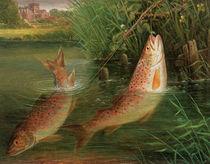Trout at Winchester von Valentine Thomas Garland