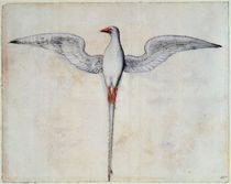 Tropic Bird von John White