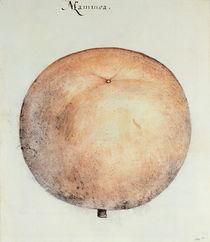 Mammee Apple von John White