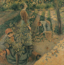 The Apple Pickers, 1886 von Camille Pissarro