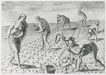 Florida Indians planting maize von Jacques Le Moyne