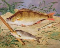 An Angler's Catch of Coarse Fish by D. the Younger Wolstenholme
