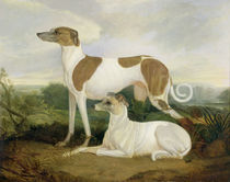 Two Greyhounds in a Landscape von Charles Hancock