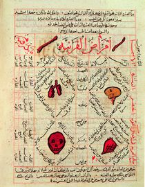 Page from the 'Canon of Medicine' by Avicenna by Islamic School
