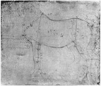 Study of a Horse von Leonardo Da Vinci