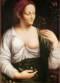 Columbine von Leonardo Da Vinci