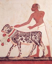 Peasant leading a cow to sacrifice by Egyptian 18th Dynasty