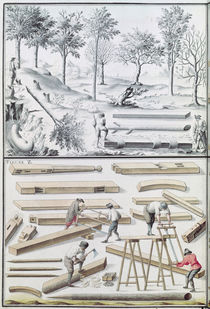 Ms 131k Different species of tree and sawing logs by Claude Masse