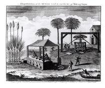 A Representation of the Sugar-Cane and the Art of Making Sugar von English School