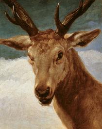 Head of a Stag, 1634 von Diego Rodriguez de Silva y Velazquez
