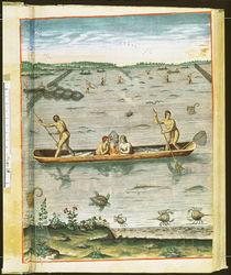 How the Indians Catch their Fish von John White