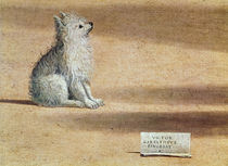 Vision of St. Augustine, detail of the dog von Vittore Carpaccio