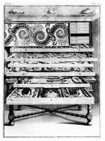 Table 6 from 'Elenchus Tabularum' by Levin Vincent 1719 by English School
