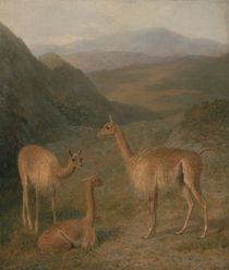 Vicunas, 1831 by Jacques Laurent Agasse