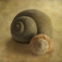 Insieme by Priska  Wettstein