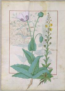 Ms Fr. Fv VI #1 fol.148v Poppy and Figwort von Robinet Testard