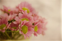 Pinky by Priska  Wettstein