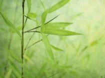 Bambou Jardin von Priska  Wettstein