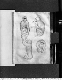 Monkeys, from The Vallardi Album von Antonio Pisanello