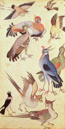 Ten Birds by Indian School