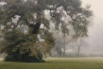 Nebelmorgen von Norbert Maier