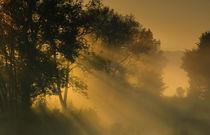 Morgenlicht von Norbert Maier