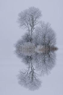 Winterstille by Norbert Maier