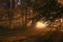 Oktoberlicht