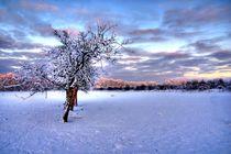 Winterlandschaft von Jens Uhlenbusch