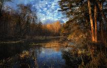 Herbst im Isar-Auwald von Norbert Maier