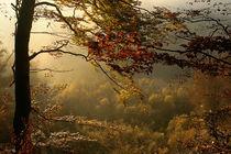 Herbst im Isartal von Norbert Maier
