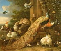 Peacock, parakeet, pelican von Melchior de Hondecoeter