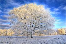 Winterzauber von Jens Uhlenbusch