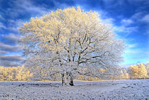 Winterzauber by Jens Uhlenbusch